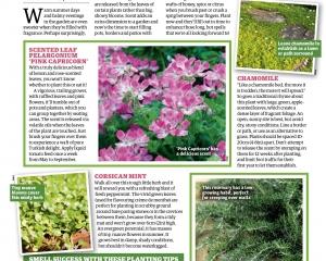 scented-foliage-1