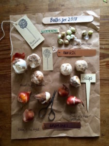 It's time to plant bulbs!