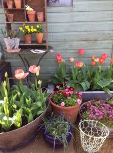 The Temporary Garden