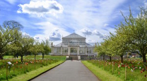 Glasshouse glory at Kew Gardens